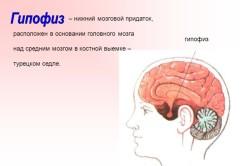 Расположение гипофиза