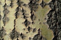 Польза дубовой коры при дизентерии